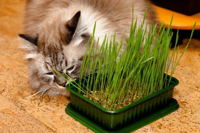 1.Почему кошки копают землю в цветах
