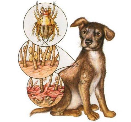 10 пугающих причин перхоти у собаки: эффективные стратегии лечения