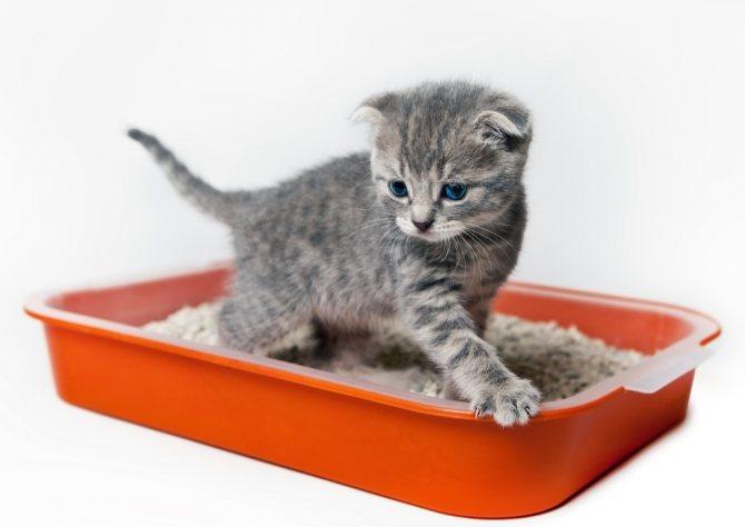 11 причин недержание кала у кошки - симптомы и лечение