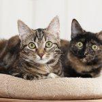 2 кошки дома
