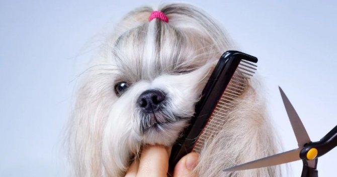 4 способа как успокоить собаку во время стрижки