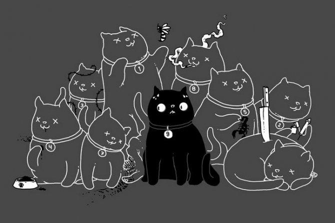 9 жизней кошки