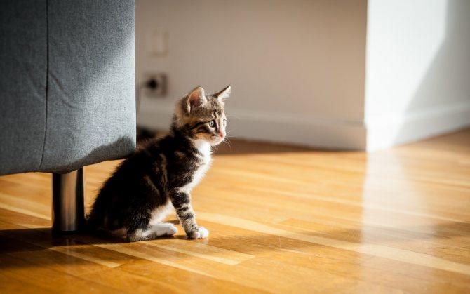 Адаптация кошки в новом доме Как помочь
