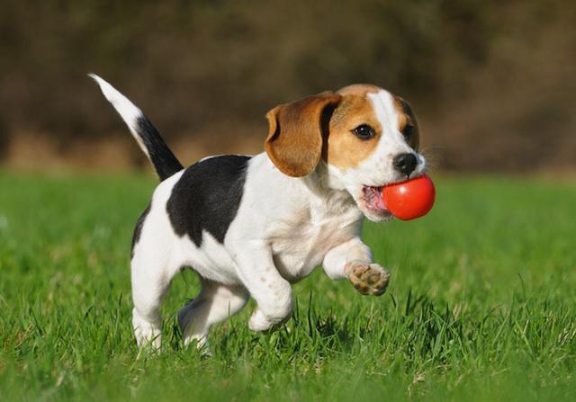 адвокат капли для собак инструкция