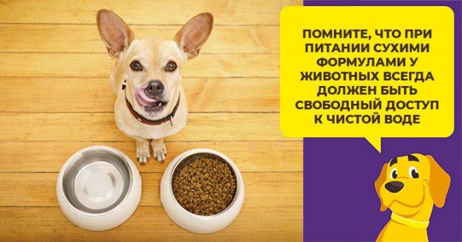 Акана - корм для собак класса холистик для крупных, средних, мелких пород