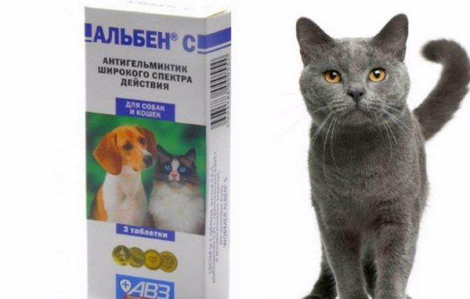 Альбен С для кошек