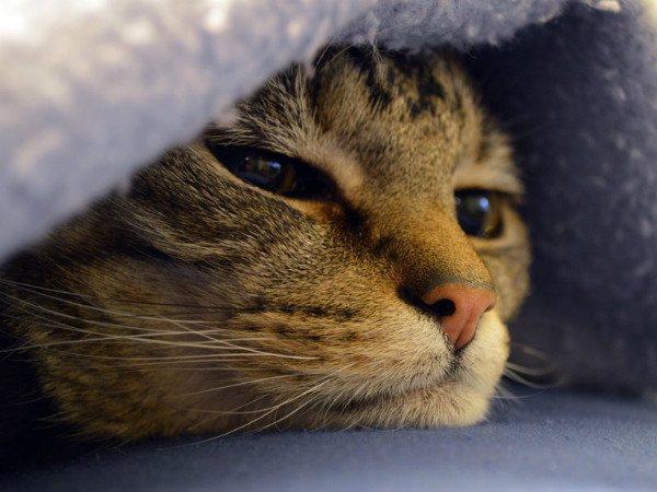 Аллергическая реакция на капли встречается крайне редко