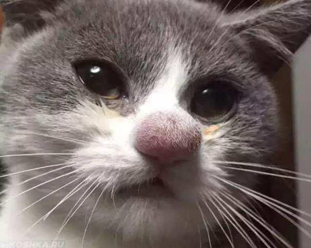аллергия у кота на капли от блох что делать