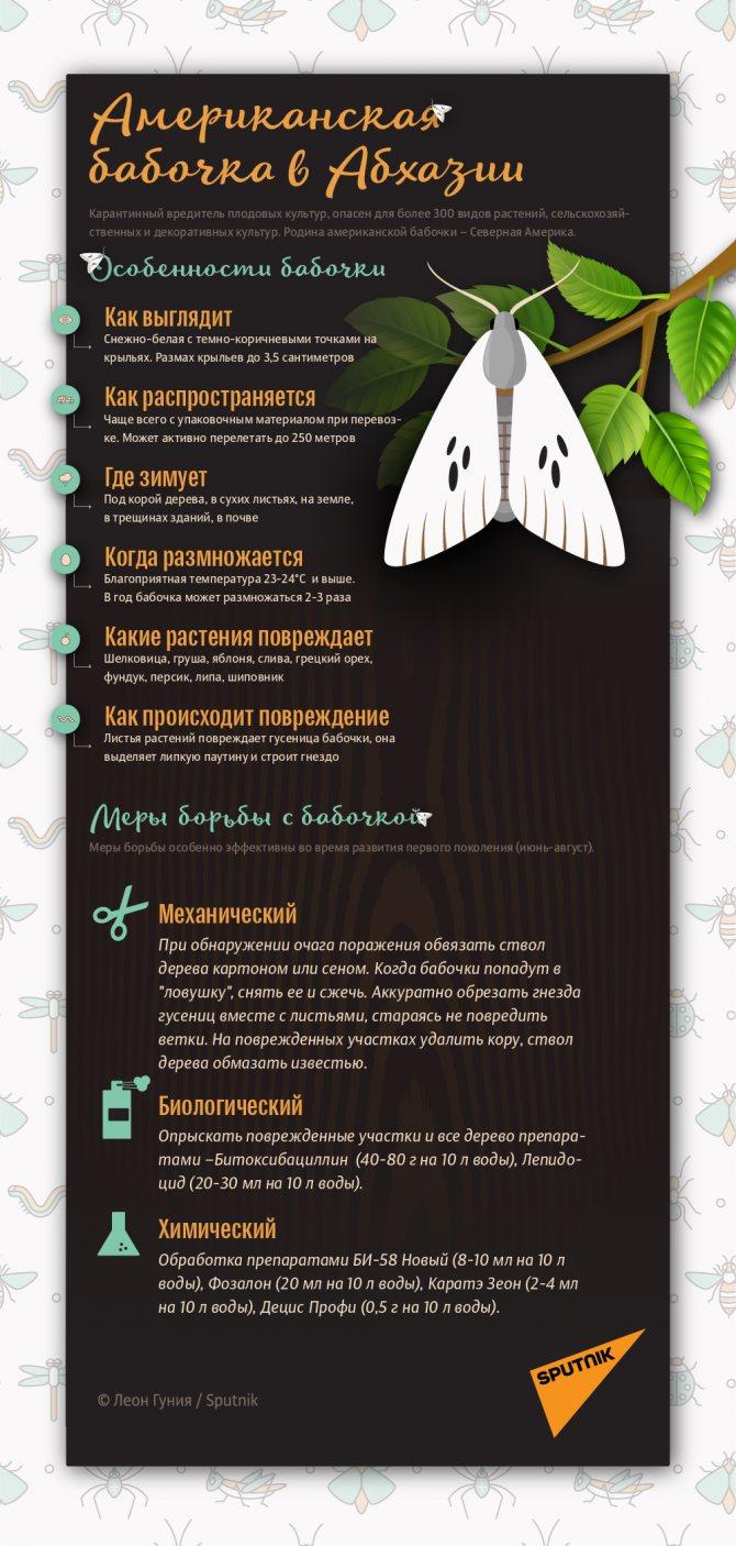 Американская бабочка в Абхазии