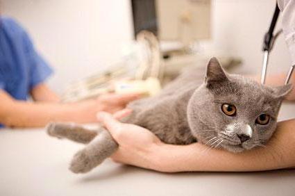 анандин для кошек инструкция