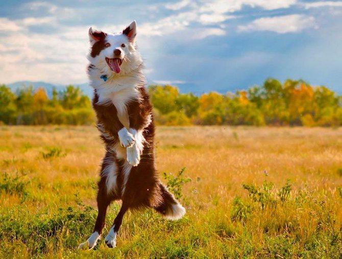 Артрогликан для собак: инструкция по применению, состав и побочные действия, аналоги