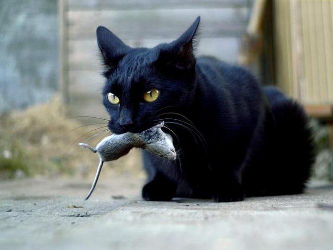 Аскаридоз у кошек симптомы и лечение