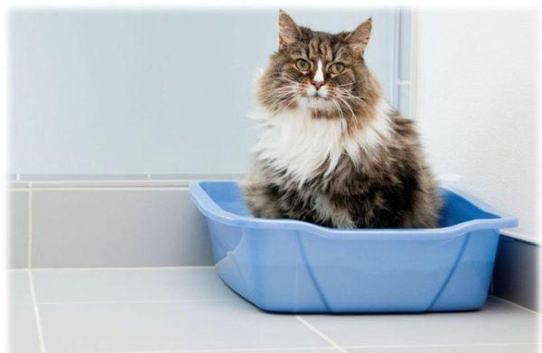 Атония мочевого пузыря у кота