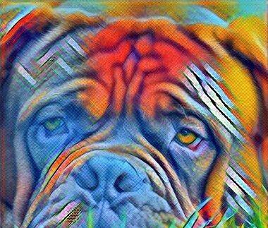 Атрофия мышц у собак