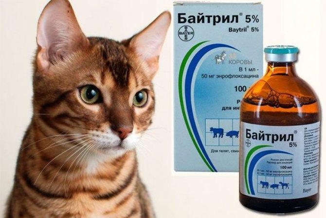 Байтрил для кошек