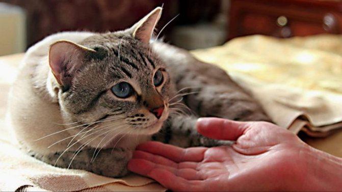 Байтрил описание препарата и схема лечения кошек