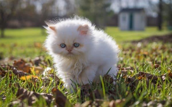 Белый милый котенок