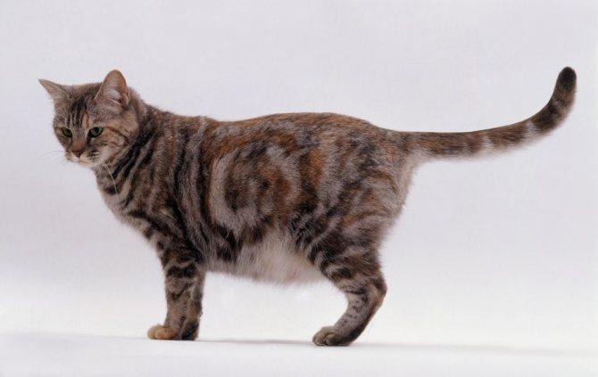 беременная кошка на поздних сроках