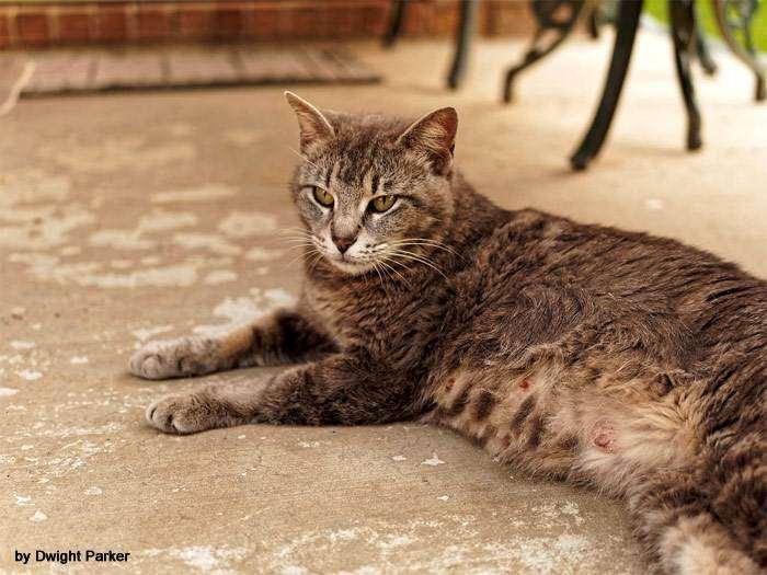 Беременная кошка отдыхает на свежем воздухе, фото фотография
