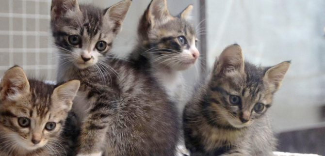 Беспородные котята не нужны