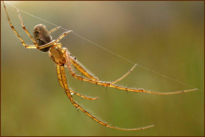 Безопасные пауки