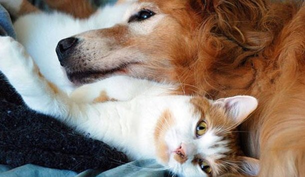 блохи от кошек собак