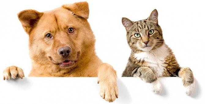 блошиный дерматит у собак и кошек