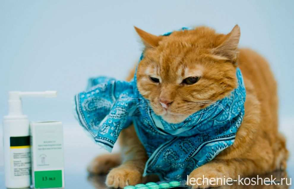 болеет кот чихает глаза гноятся лечение
