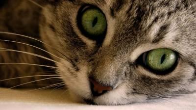 Болезнь желудка у котов: симптомы заболевания, лечение желудка кошки, виды желудочных болезней кошек