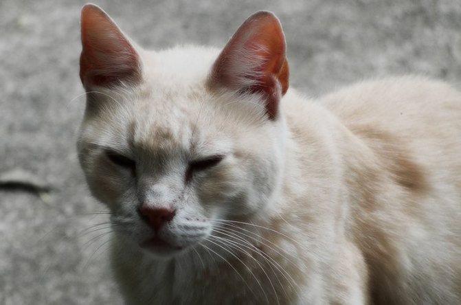 Болезненный вид у кота