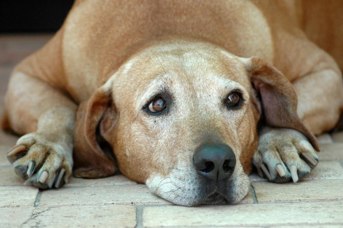 Болезни костей у собак