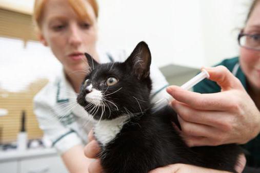 болезни котов симптомы и лечение