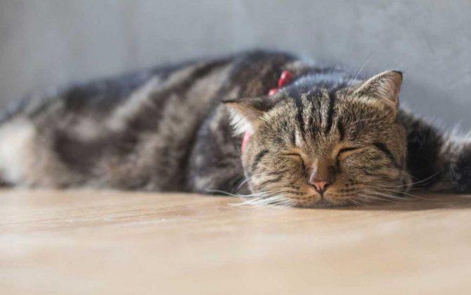 болезни почек у кота
