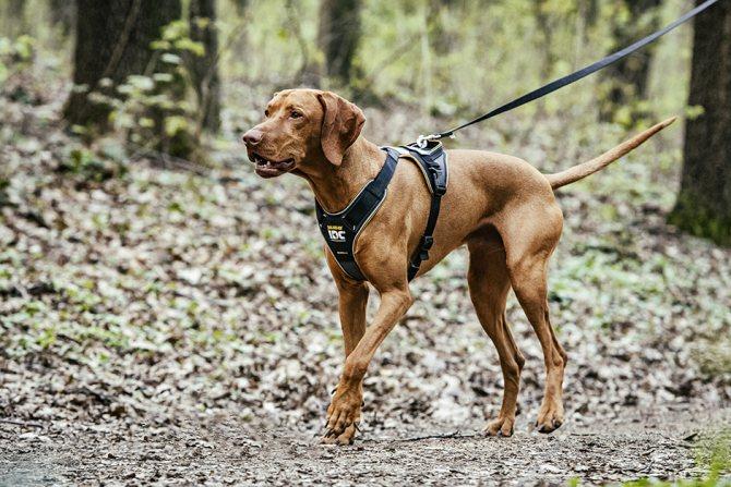 болезни, при которых собака вялая, опасные для человека