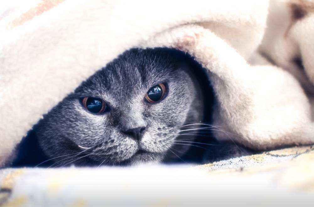 Болит горло у кота чем лечить