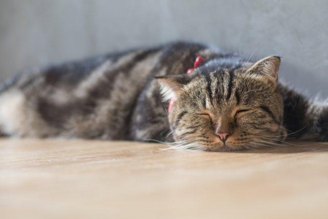 Больная кошка много спит
