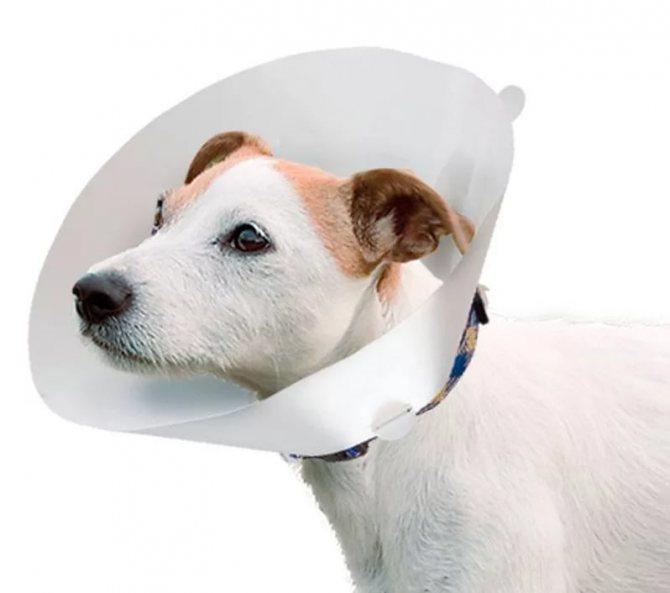 Больная собака