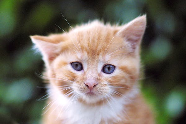 Больной котенок