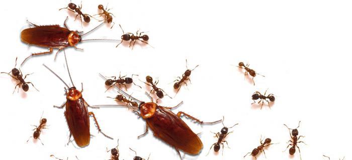 Большой плюс аквафумигатора универсальность - уничтожает всех домашних паразитов