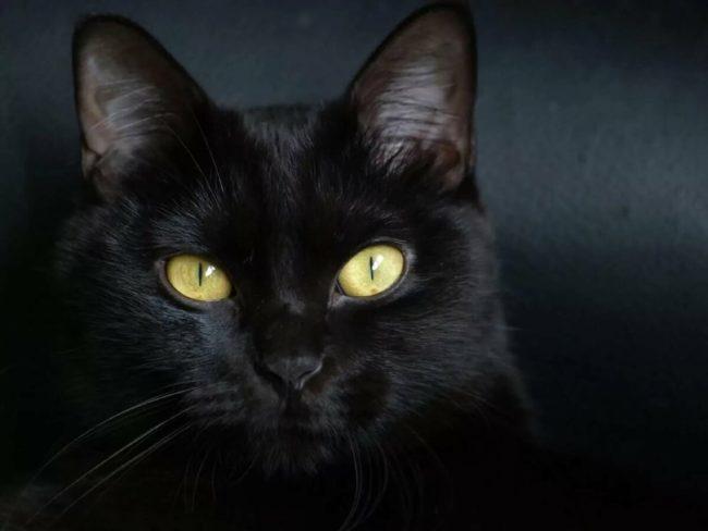 Будь бдителен, водитель: что случится вскоре с машиной, на которой сидела кошка
