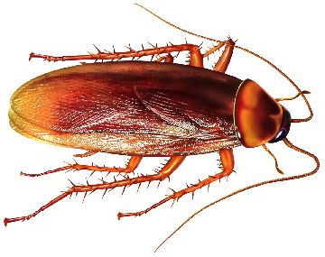 бытовые тараканы
