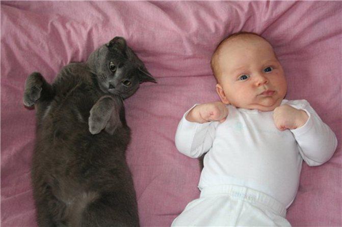 cats mixstuff 1 6 милых кошачьих повадок и их неожиданные объяснения