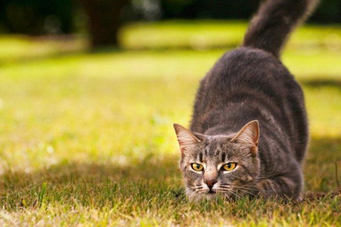 cats mixstuff 6 6 милых кошачьих повадок и их неожиданные объяснения