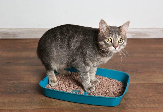 Частая диарея у животного - причина консультации у ветеринара