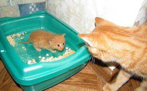 Часто котята используют наполнитель не по прямому назначению