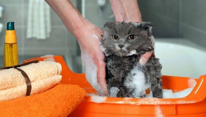 Частота мытья кошек