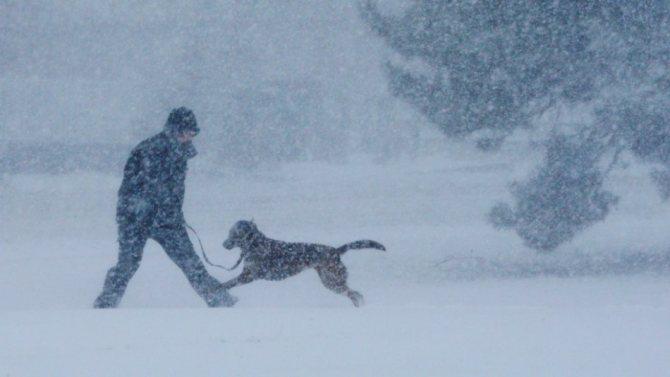 Человек и собака гуляют в метель фото