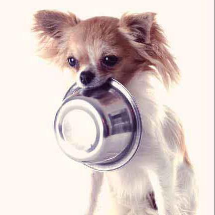 чем кормить щенка той терьера 2 месяца