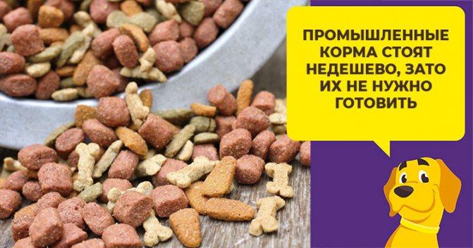 Чем кормить среднеазиатскую овчарку: рацион для взрослых собак и щенков