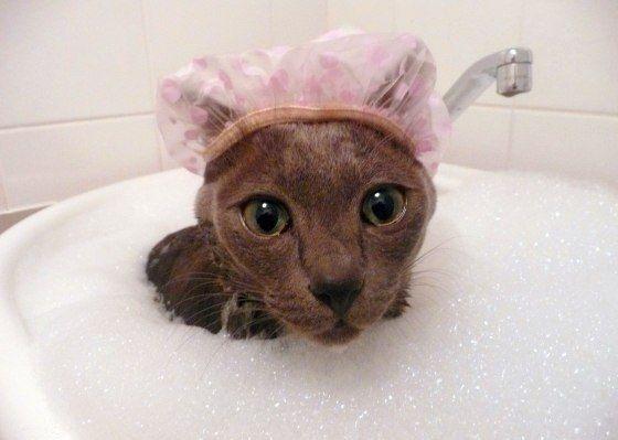 Чем лучше всего мыть животных